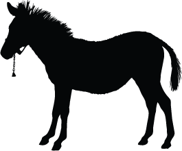 Horse Download