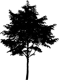 Tree Download